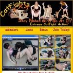 CatFights XXX